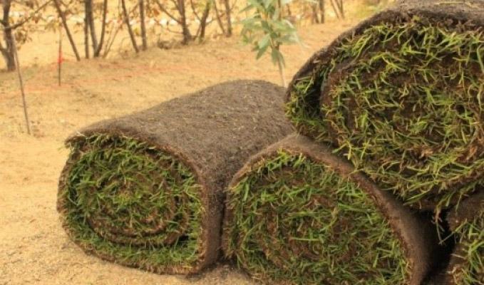 Excellence Garden, Pepinière : vente de végétaux gazon plaque